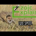 How To Measure Site Speed for SEO and Your Visitors